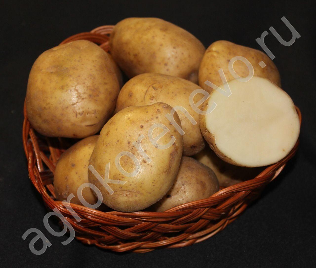 Гуково семена картофеля устойчивыйк жукам Пенсионные